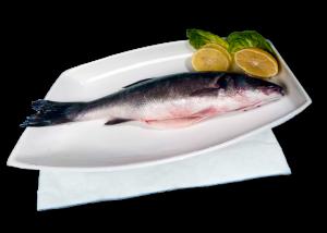 FishPad